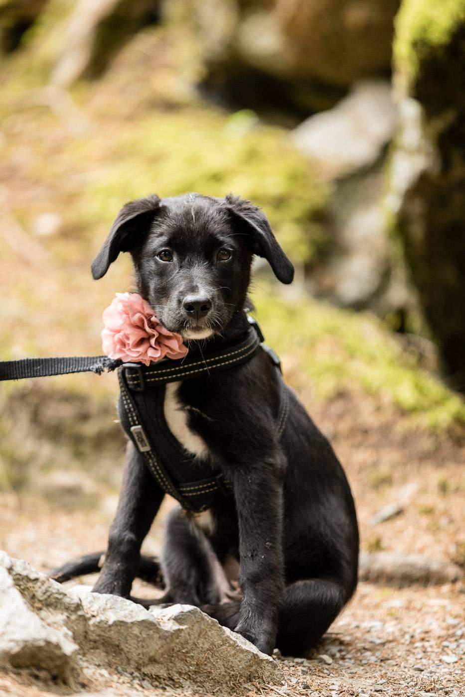 aschenputtel-hochzeitsfotograf-hund-piburgersee-tirol